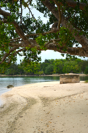 A boulder sits on a deserted beach in Fiji. An enormous tree grows over the beach. A forest grows to the edge of the sand on the far side of the bay.