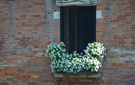 White flowers with green leaves overflow a window box. The window has a patterned black iron screen. The wall is of terracotta-coloured bricks. Stock Photo