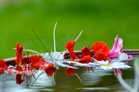 Pink, white and orange flowers float in an outdoor bowl of water. They are reflected in the ripples on the water. The background is green.
