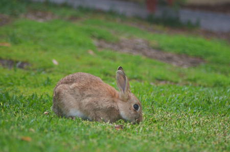 A small rabbit is eating some grass in a field. He is pale brown. A stream is visible in the distance.