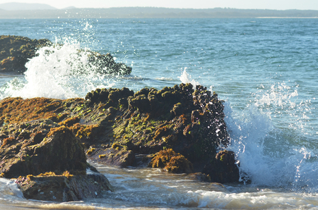 The foam of breaking waves is spraying over brown rocks. These are covered with brown and green seaweed. A headland is in the distance, and the sky is clear.