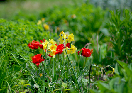 Bright red and yellow flowers are growing wild in a field. They are surrounded by greenery.