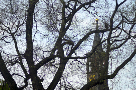 The black steeple of a church is seen through the bare branches of a tree. A clock with gold detailing is on the steeple. The sky is overcast.