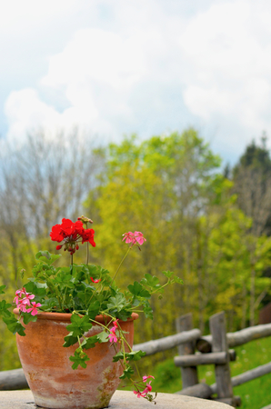 Flowering geraniums are in a terracotta pot on an outdoor table in the Austrian alps. Behind is a wooden fence and trees. White clouds fill the sky. Stock Photo