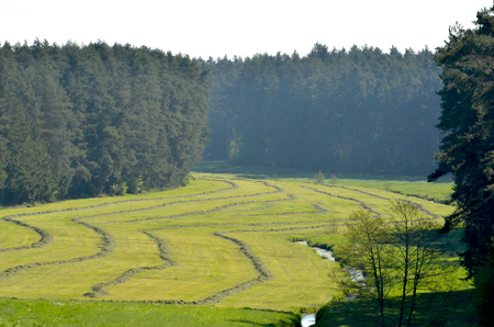 A field has been mowed, leaving striped patterns. On either side it is bordered by fir trees. A small creek runs through it.