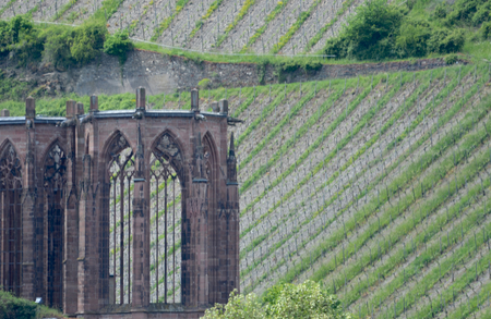 The ruins of a church are surrounded by the slopes of a vineyard. Rows of grapevines are covered in new growth. The vineyard can be seen through the window arches of the church.