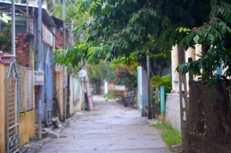 A small laneway runs between houses in Hoi An, Vietnam. Different coloured fences and walls border the path. A tree frames the view. The scene is deserted.
