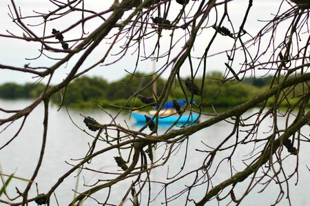 The blue hull of a yacht can be seen through the branches of a tree. The branches have no leaves but are covered with banksia pods. The yacht is moored in a bay, and a tree covered headland is in the diaatnce.