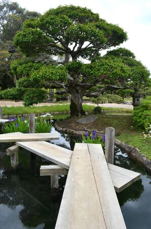 A zigzag walkway made of wooden planks lead over a pond to a tree in a Japanese garden. White and purple irises are growning in the pond. Stock Photo