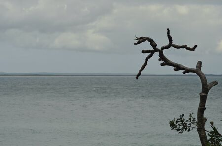 A grey sea is framed by the branches of a dead tree. The sky is overcast. A headland, with a beach and tree covered hills, is in the distance.