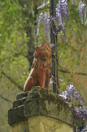 An old terracotta lion statue sits on top of a stone fence. Flowering wisteria is growing nearby.