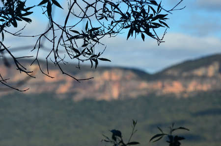 Leaves and small branches of a eucalyptus tree are seen in silhouette against a blue sky. In the background are sandstone rock faces in the Blue Mountains, Australia. The valley between is filled with forest.