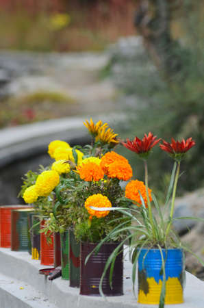 Plants with yellow, red and orange flowers are in old tins which have been painted i a variety of colours. The flowers include chrysanthemums. The plants reast on a concrete wall, with a garden out of focus in the background. Stock Photo