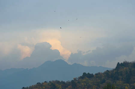 Eagles are seen circling above a forest. Storm clouds are rising over a distant mountain range. The clouds are grey and white. Stock Photo