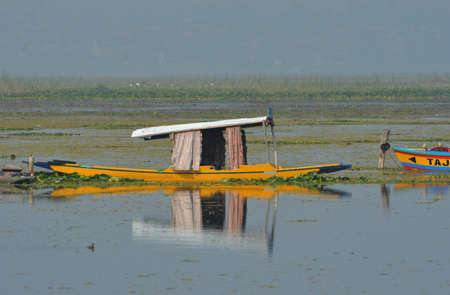 A bright yellow boat with a white roof is moored on a lake in Kashmir. The prow of another boat is nearby. They are surrounded by water plants and reeds. A coot is in the foreground, and a mist fills the distance.