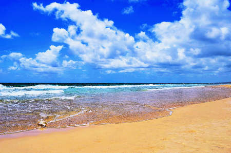 Gentle waves are breaking onto the smooth sand of a beach. A white shell is on the tide line. The sky is blue, with white clouds. The image is in the style of a watercolour painting.
