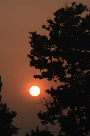 Trees appear black against the orange of a dawn sky. The sun is a white orb tinged with yellow.