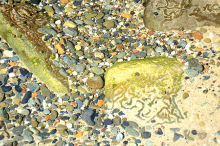 Periwinkles and other sea molluscs have left trails in the sand at the bottom of a rockpool. Other shells and colourful pebbles are also in the water.