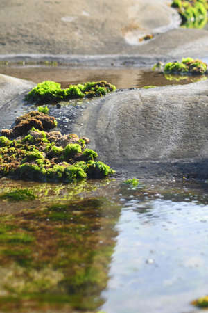 Green and brown seaweed is growing out of a rock pool and over the surrounding rocks. It can be seen as a reflection in the water. Stock Photo