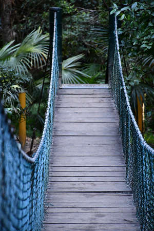 A suspension bridge made from wooden planks with black metal mesh sides serves as a walkway in a forest. Trees and ferns are at the far end of the bridge.