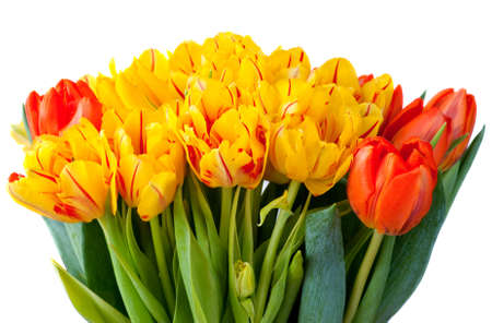Yellow and red tulips bouquet isolated on white photo