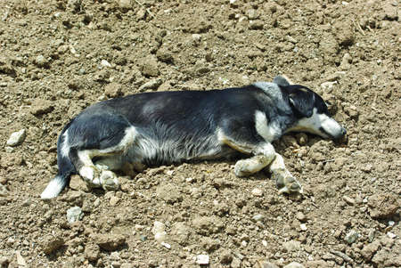 leaden: Homeless dog resting on dry ground under straight sunbeam