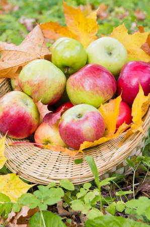 Fresh apples in basket photo