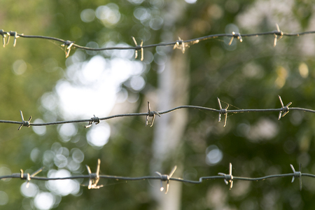 barbed wire fence: Barbed wire on a green fence Stock Photo
