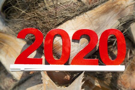 Digit 2020 against the background of a palm trunk. The meeting of the new 2020 in a tropical country.