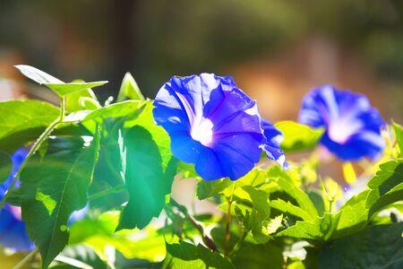 Beauty autumn flowers, bright sunshine. Bright vivid colors. Nature background Turkey Flower bed