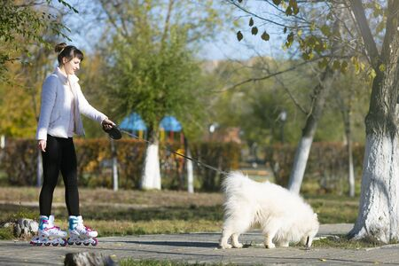 The dog pulls a girl on ice skates The girl is roller-skating holding a large white dog by leash, Zdjęcie Seryjne