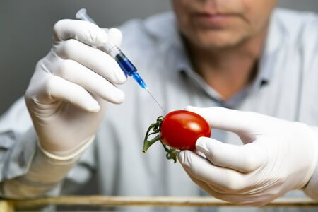 A man injects chemicals into tomato, GMO fertilizers and chemicals with a syringe to increase the shelf life of vegetables