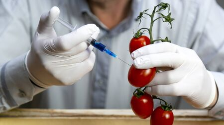 Chemical processing of vegetables, fertilizers and GMOs. A man injects chemicals into a tomato GMO fertilizers and chemicals with a syringe to increase the shelf life of vegetables