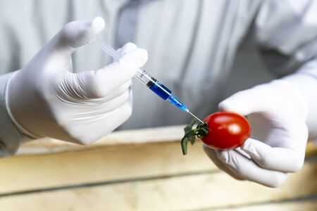 Chemical processing of vegetables, fertilizers and GMOs. A man injects chemicals into a tomato, GMO fertilizers and chemicals with a syringe to increase the shelf life of vegetables. Reklamní fotografie
