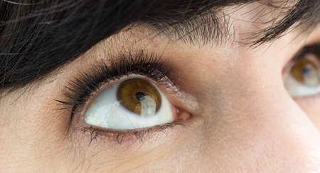 Female eye with lush eyelashes and makeup eyelids close-up.
