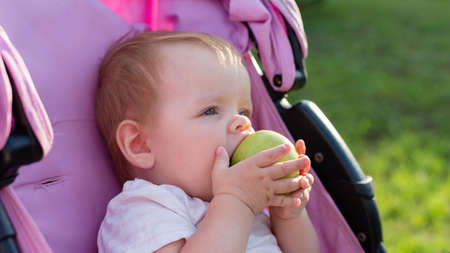 A small blonde child sitting in a baby carriage and eating an apple. 版權商用圖片
