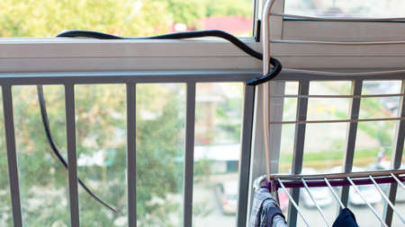 black venomous snake climbed into residential building through a window on the balcony.