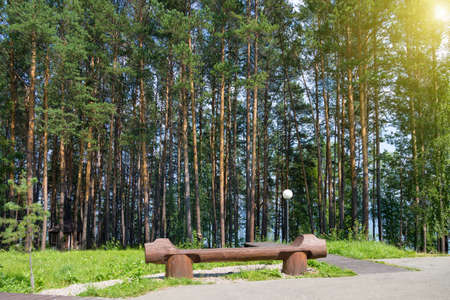 large creative wooden bench in park among tall fir trees.