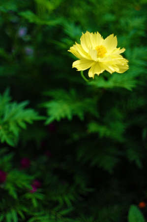 goodly: Flower in Thailand Stock Photo