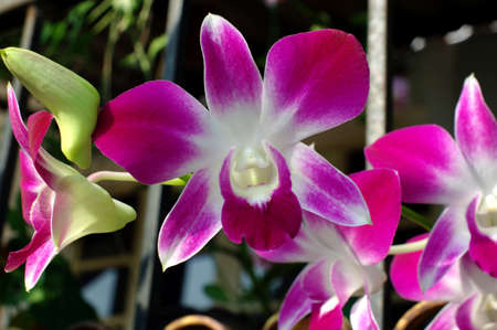 goodly: Orchid