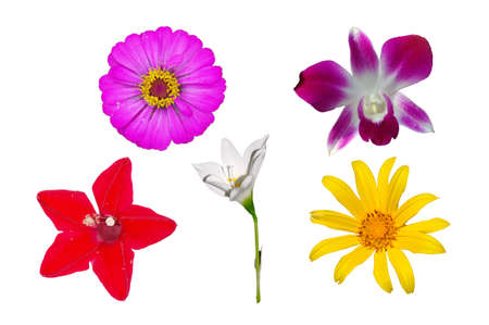 Isolated Flower Stock Photo - 13596379