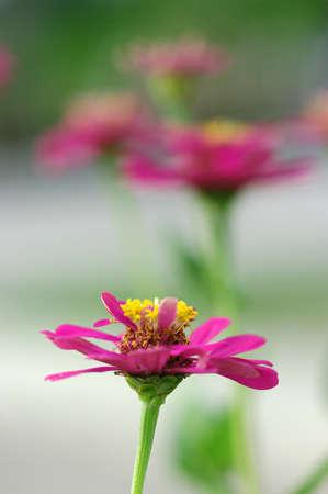 sprung: Pink Flower