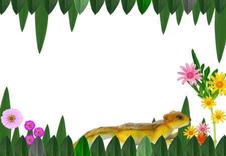 Texture Flower squirrel photo