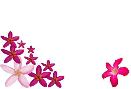 Texture flower Stock Photo - 14096212