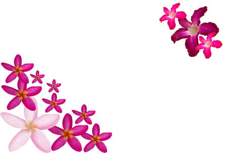 Texture flower Stock Photo - 14087616