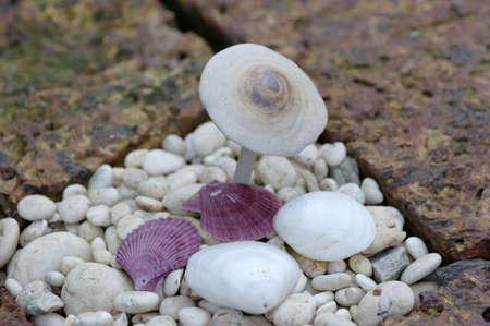 Shell and mushroom