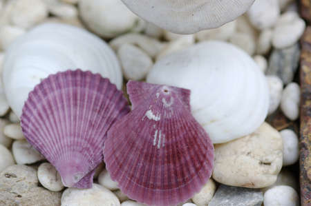 shell and stone photo