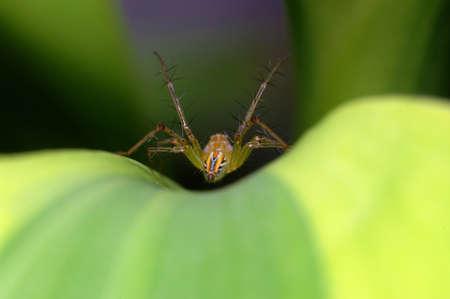 Buttocks spider photo