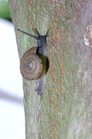 Snails are a few more trees Stock Photo