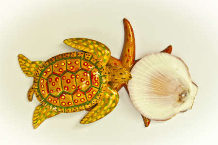 Texture turtle starfish and shell arranged by concepts Stock Photo - 17870202